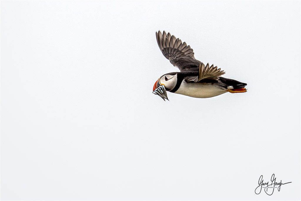 Farne Islands Workshop - Seabird wildlife experience!