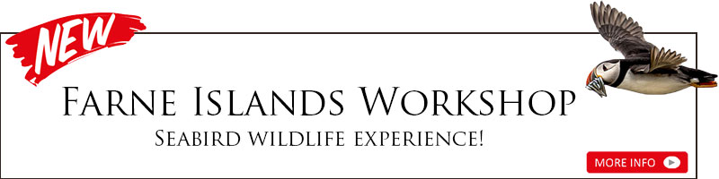 Farne Islands Workshop - Seabird wildlife experience