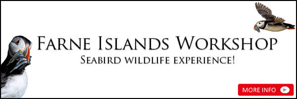 Farne Islands Workshop - Seabird wildlife experience!