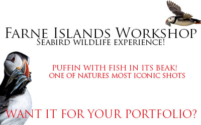 Farne Islands Workshop – Seabird wildlife experience!